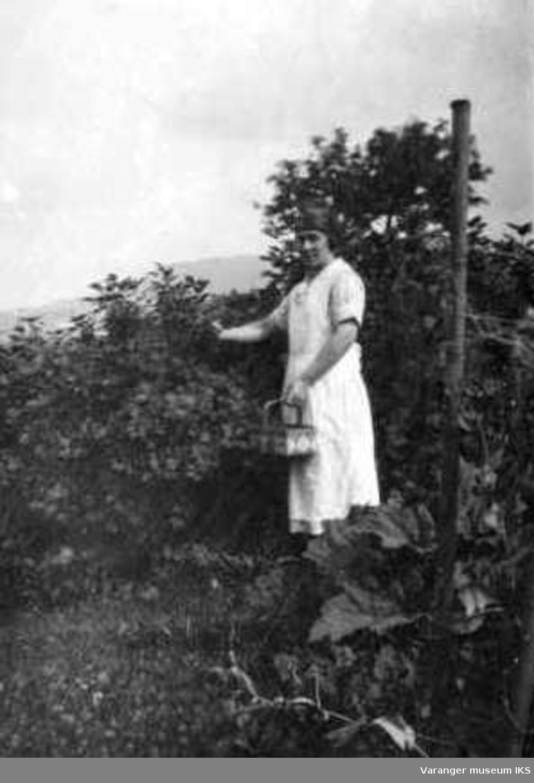 Mildrid Karlsen plukker bær.