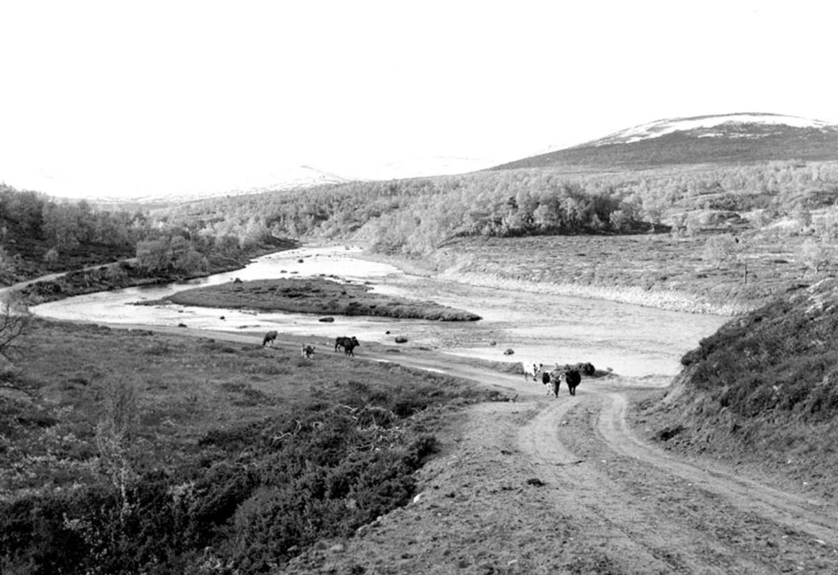 Einunddalen, Alvdal