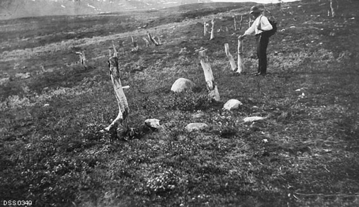 Avskoget fjellterreng i den såkalte Dødesskogen i Målselv i Troms.  Fotografiet er tatt i svakt skrånende, lyngbevokst terreng der det står en del cirka meterhøye stubber etter bjørketrær.  Det var slik samene, som ikke hogg med økser, men med lange, tunge kniver, felte bjørkeskog.  En mann med svarte bukser, kvit skjorte og vidbremmet hatt sto ved en av stubbene da fotografiet ble tatt.  Fotografiet er tatt av skogplanter Hilbert Helgesen, som hjalp skogforvalter Ivar Ruden med å befare store utmarksområder i Troms på oppdrag fra skogdirektøren, som ville ha dokumentert eventuelle skader de svenske reindriftssamene som oppholdt seg i fylket sommerstid påførte skogen.  Rudens beskrivelse av forholdene i det området der dette fotografiet er tatt er gjengitt under fanen «Opplysninger».