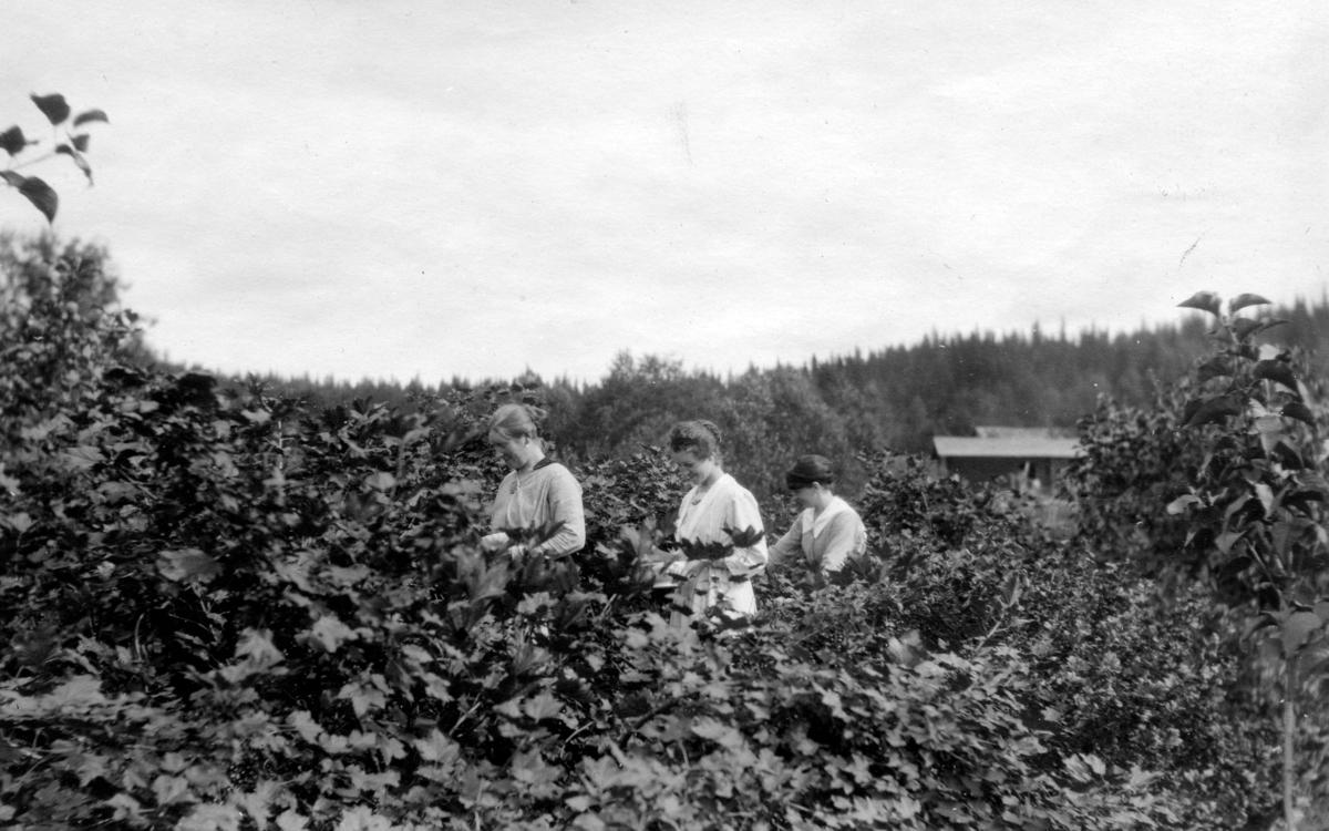 Kvinner jober i hagen