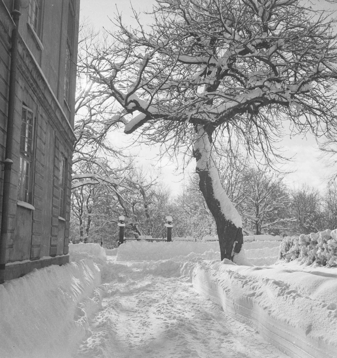 Vinter i byen