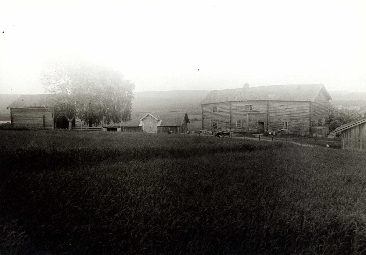 Bakli, Sør-Odal, Hedmark 1925. Gårdstunet sett fra kornåker.