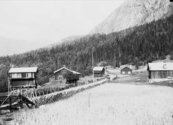 Kvisle, Numedal. Rollag, Buskerud, 1906. Gård med vei mellom