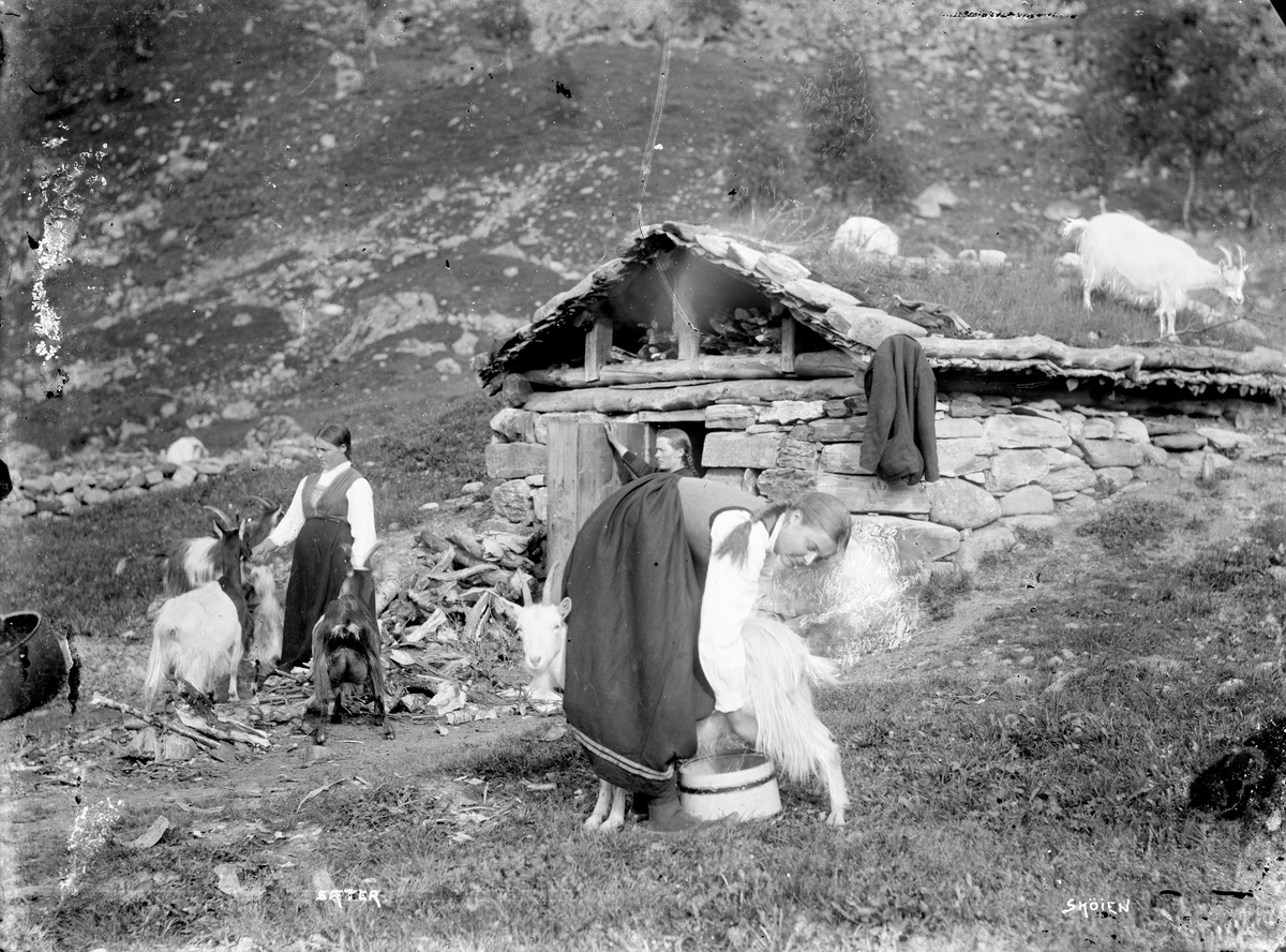 Jente melker geit, på seter, ukjent sted. Tre kvinner og geiter ved seterbu.