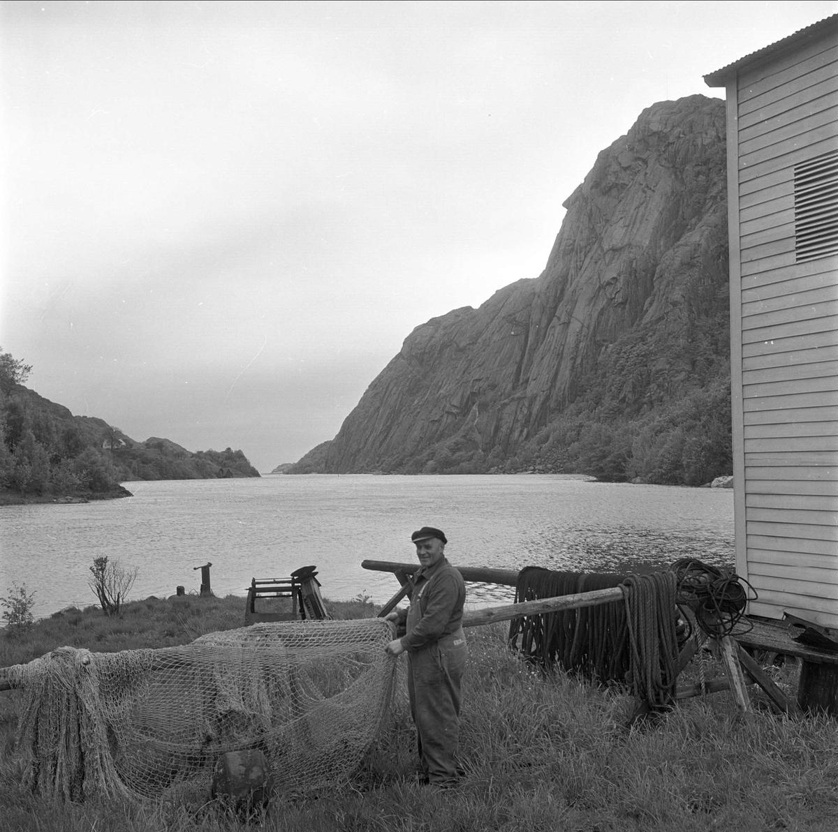 Vest-Agder, juni 1964. Tørking av garn.