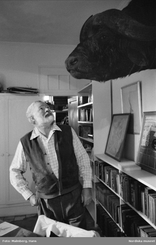Författaren Ernest Hemingway nedanför jakttrofé, ett buffelhuvud, i sitt hem Finca Vigía, San Francisco de Paula, Kuba