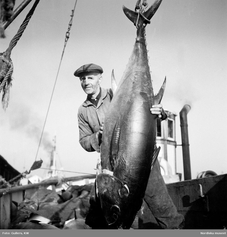 Fiskare bredvid stor fisk upphängd från stjärten.