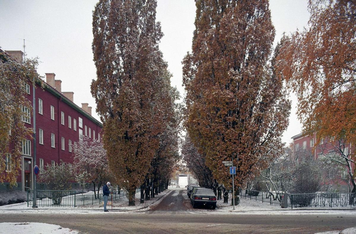 Allé i korsningen Botvidsgatan - S:t Olofsgatan, kvarteret Aslög, Kvarngärdet, Uppsala 1992