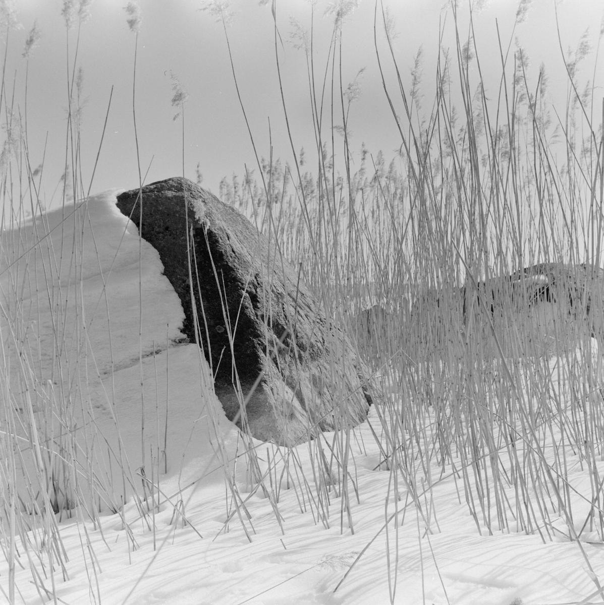 Berghäll vid Mälarens strand i Fagerudd, Enköping, Uppland 1961