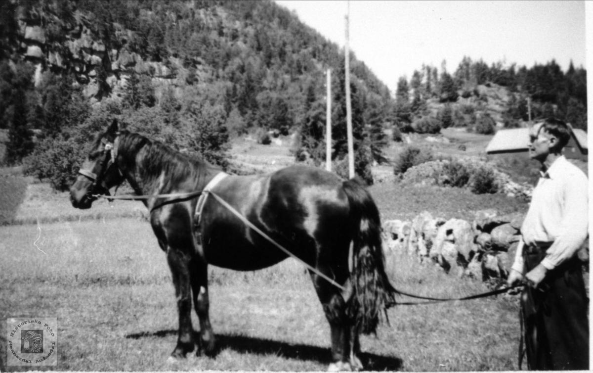 Søren Foss med hesten, Foss Bjelland.