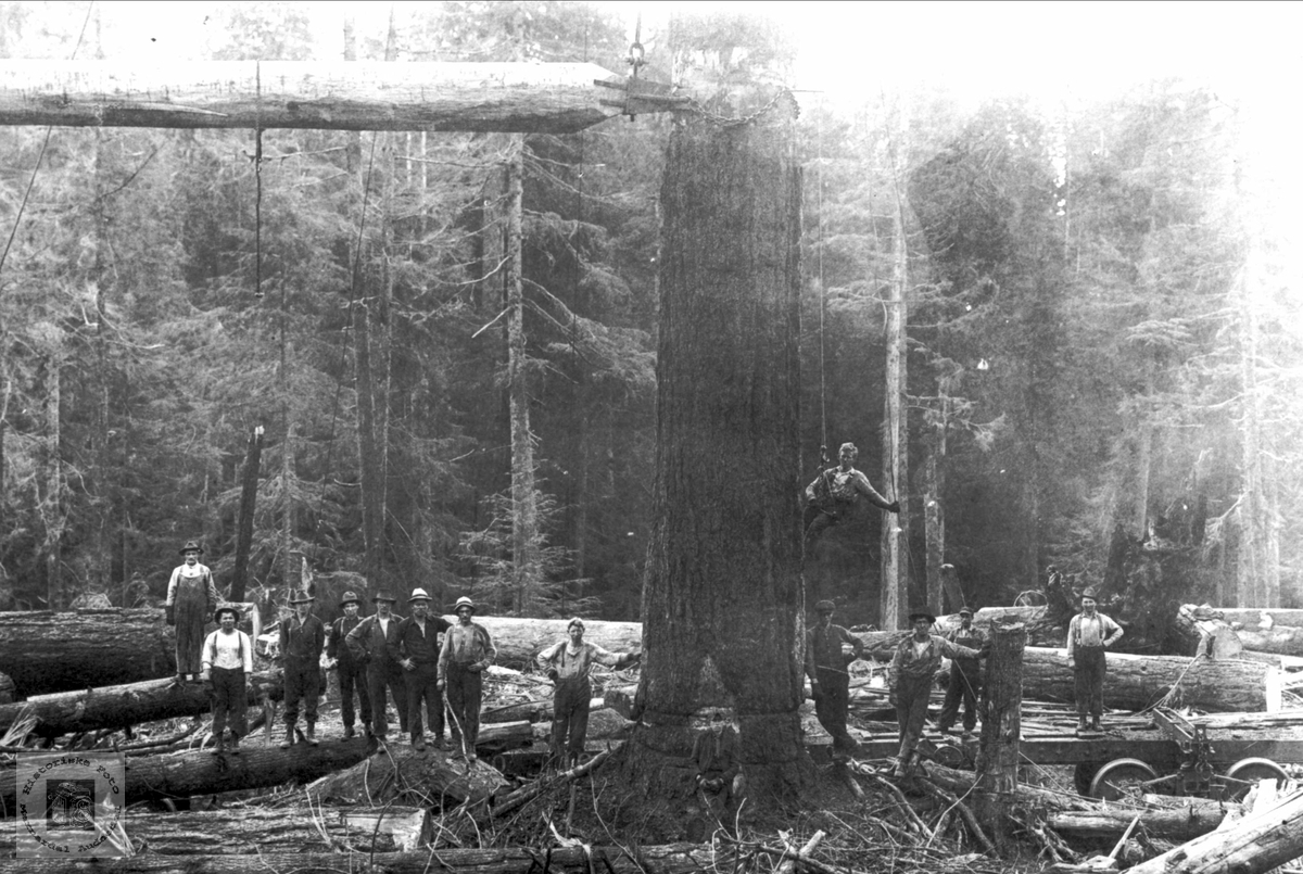 Skogsarbeid i Canada.