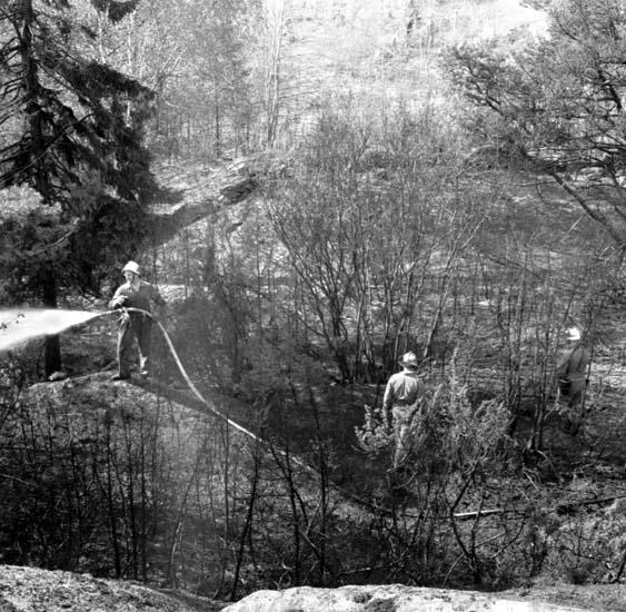 """Enligt notering: """"Skogsbrand vid Thordens Lada 12/5 -59""""."""