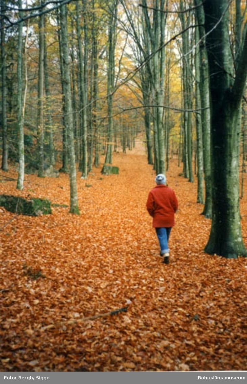"""Enligt text på fotot: """"Bokskogen vid Åby säteri, innan här blev djurpark. Bilden tagen 1986. Numera finns här (1995) burar för djuren samt hägn""""."""