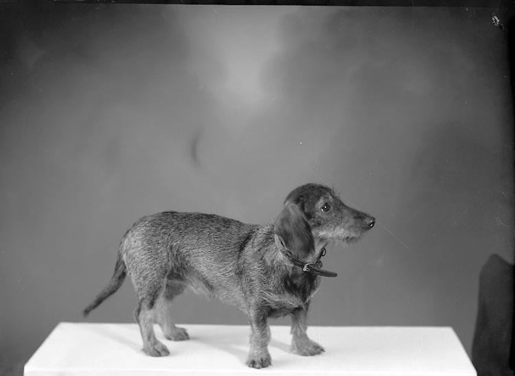 "Enligt fotografens journal nr 8 1951-1957: ""Fröjdengård, Fru Lisbeth Box 5 Stenungsund""."