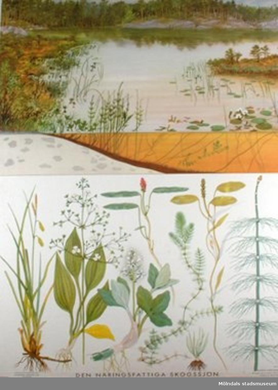 :1: Den näringrika lerslättsjöns växter.:2: Den näringsfattiga skogssjön.:3: Mossig barrblandskog.:4: Barrskogens växter.:5: Lövängen.:6: Lövängens växter.:7: Havsstranden.:8: Havsstrandens växter.
