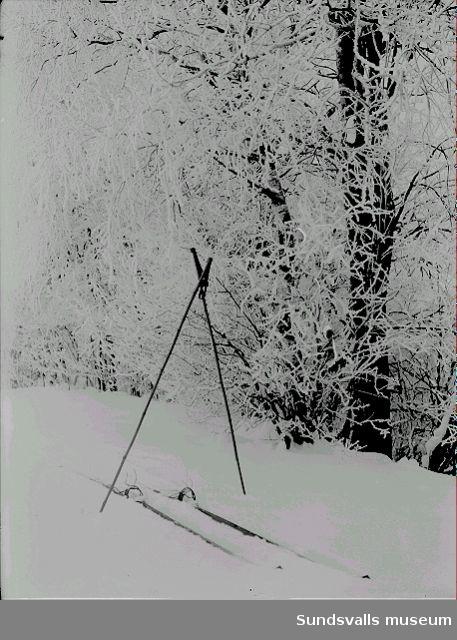 Skidor och stavar i skidspår.