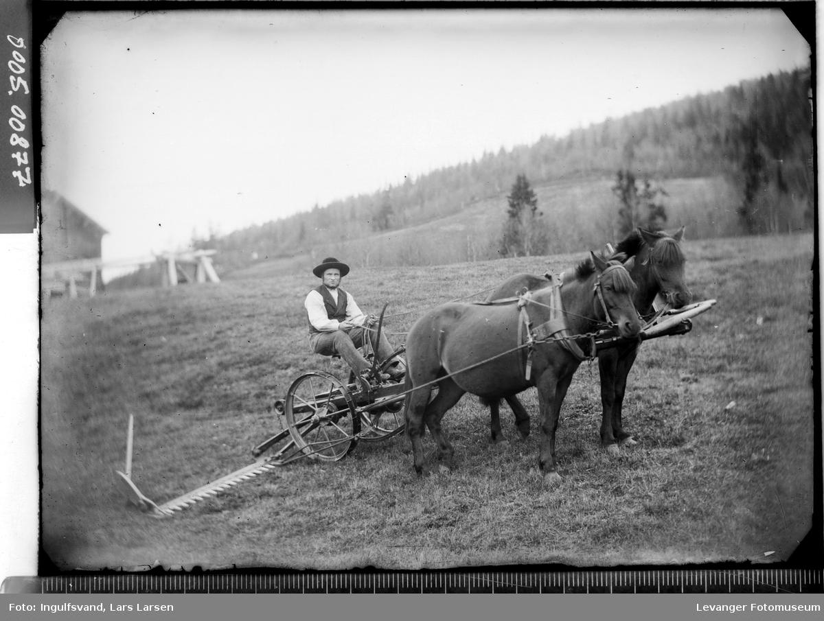 Høyonn med hester og slåmaskin.