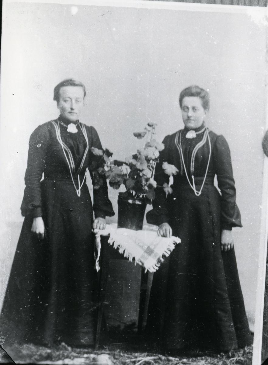 To kvinner i helfigur, med bord med potteplante mellom seg. Lerretbakgrunn
