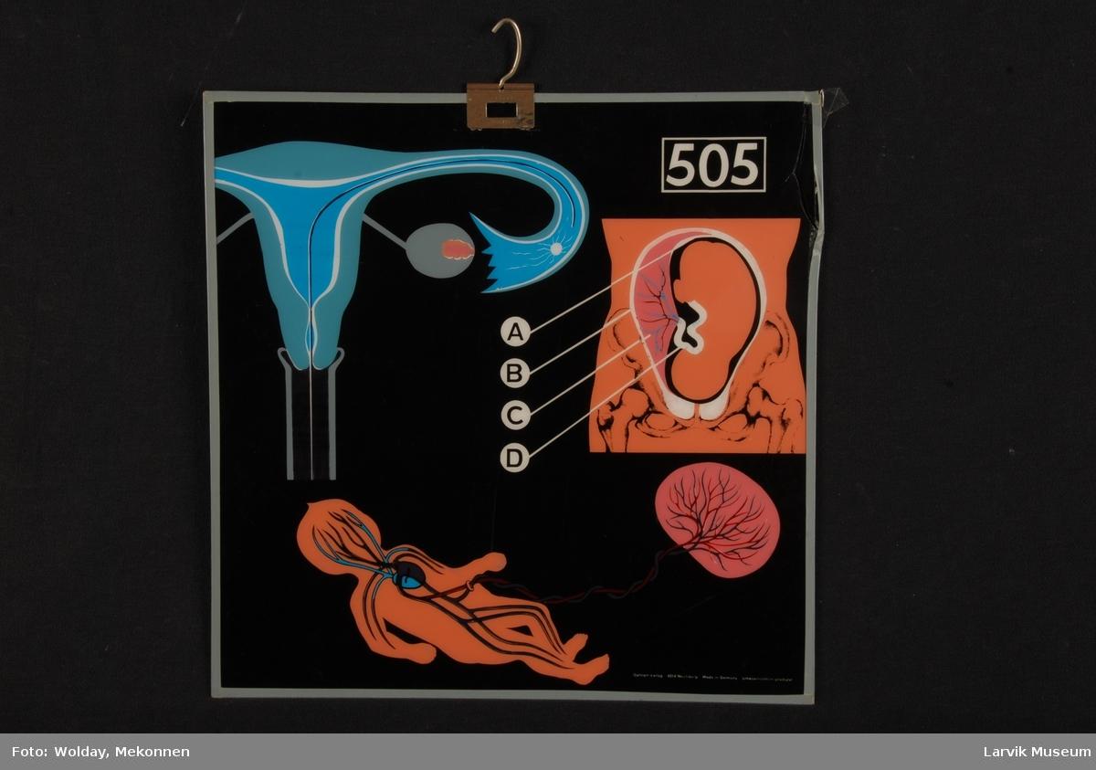 Plansje nr. 505. Befruktning, barnet i livmoren, næring gjennom navlestrengen