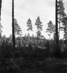 Skogsförvaltningen, diverse.