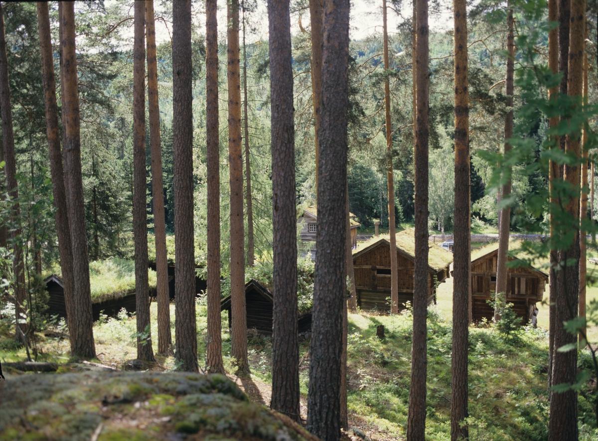 Bygdetun sett gjennom furuskogen på Kviteseid Bygdetun, Telemark. Illustrasjonbilde fra Bonytt 1988.