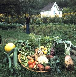 Utvalgte grønnsaker fra eget småbruk eller kjøkkenhage. Illu