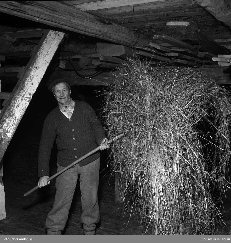 Reportagebilder hemma hos familjen Höglund i Norrkrånge by i Söråker. Reportaget handlar om att den lilla byn, som tidigare varit genomfartsort på landsvägen mot Härnösand, nu hamnat ensligt och avsides sedan vägen dragits om. Bilderna visar hemmansägare Frans Höglund och hans maka Jenny som fostrat 13 barn vilka nu är utflugna. Det åldriga paret strävar dock på som vanligt med skogsarbete, mjölkning och vävning.