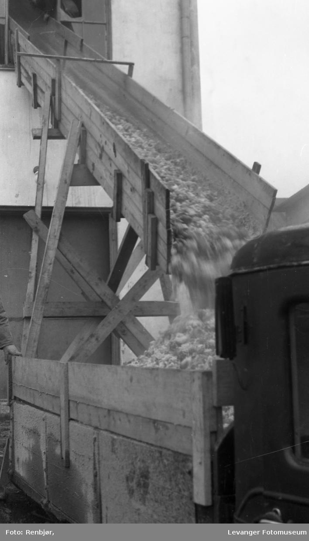 Potet-tørkeriet, Levanger, poteter losses i lastebil.