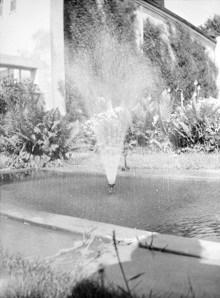 Sannsynligvis er bildet tatt mellom drivhus og gartnerbolig, knyttet til den Victorianske hagen med et hjørnet og med en hagegang. I midten en fontene, rundt bassenget vokser bl. a. bregner.