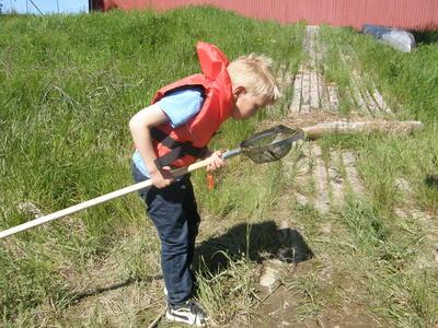 Foto av en gutt som ser etter vanninsekter i stangsilen sin. Foto/Photo