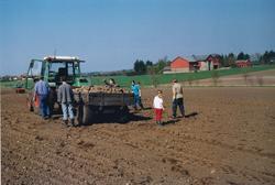 Steinhenting på Grødem bruk 4 våren 2004. Både vaksne og bar