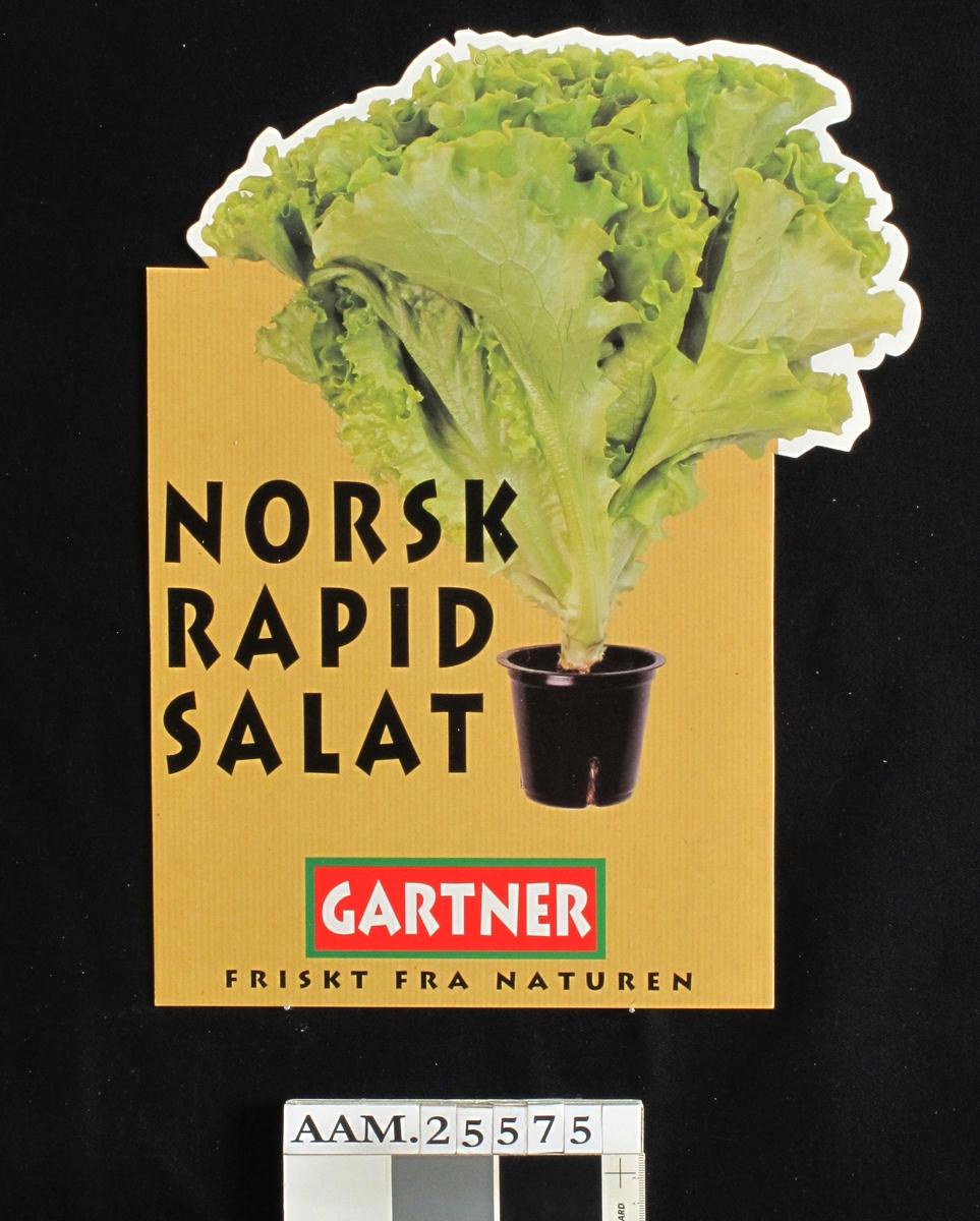 Salathode i sort plastpotte, mot gråpapir.