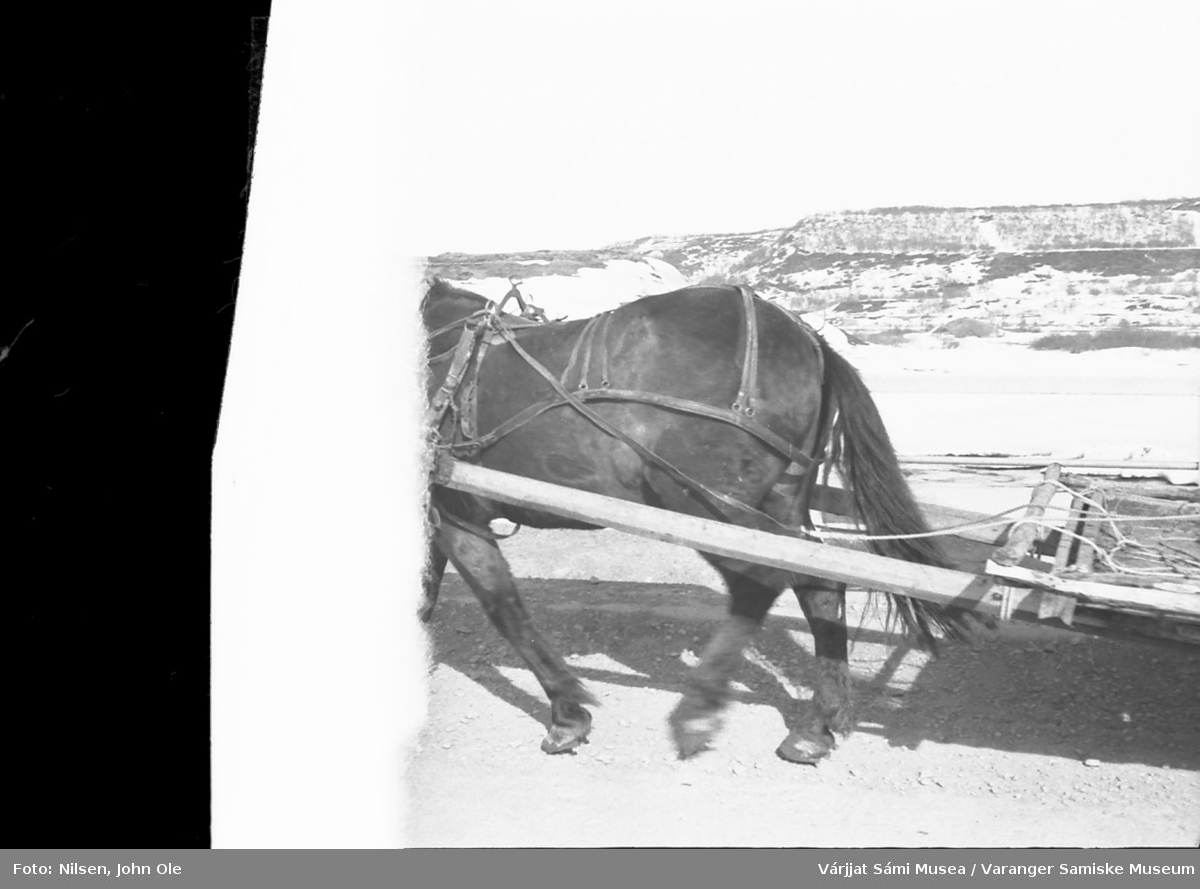Hest som trekker en kjerre.  Tatt i Nesseby et sted, men usikkert hvor. Kan minne litt om Bergeby med elveleiet bak ryggen på hesten. 1967.