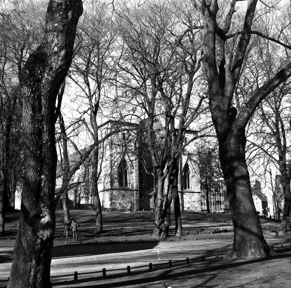 Landskap. Bergen. En gammelt ærverdig bygning bak store, kraftige trær.