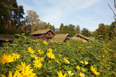 Landsbygda på  Norsk Folkemuseum,. Hus, trær, blomster.