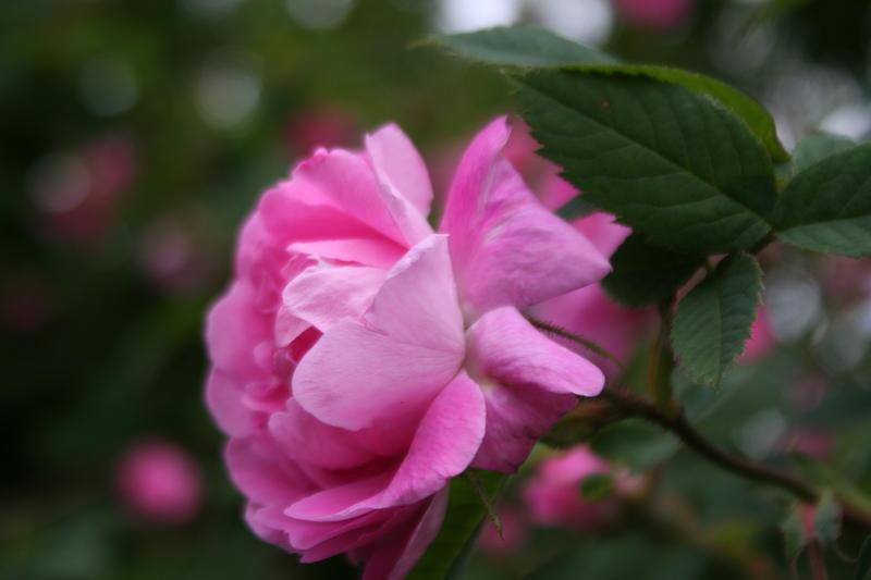 blomster_037.JPG