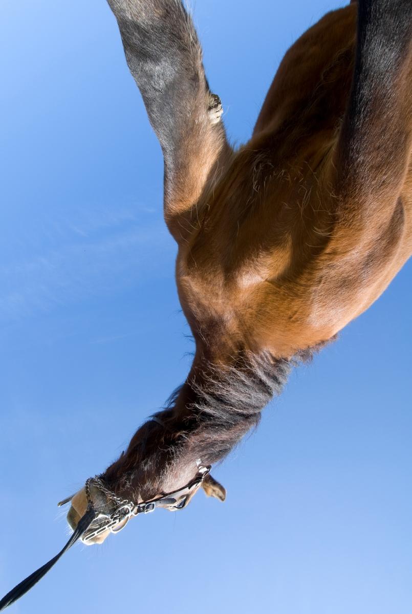 Hest fotografert i en uvanlig vinkel