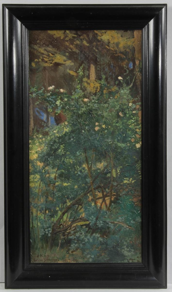 I mitten blommande nyponbuske i dova färger. I bakgrunden anas några tallar.