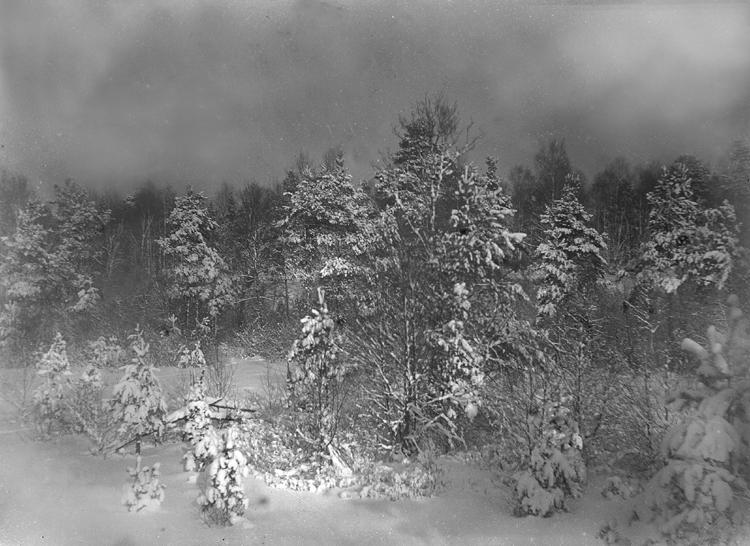 Foto av ett snöigt landskap med tallar och granar.