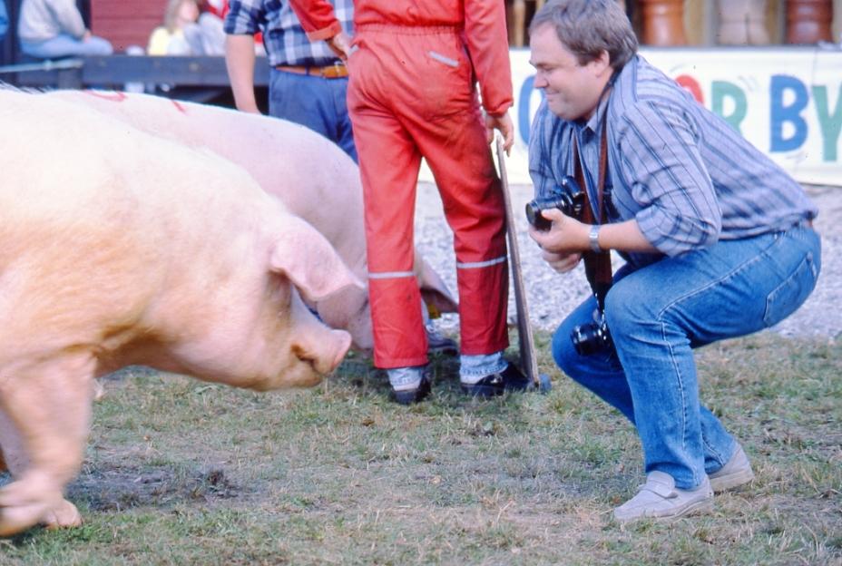 Mønstring av gris