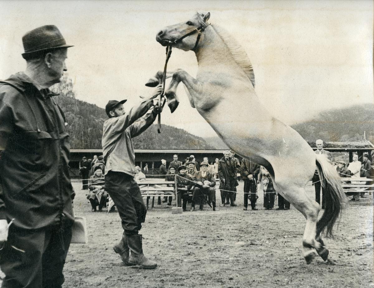 Hestetemjing