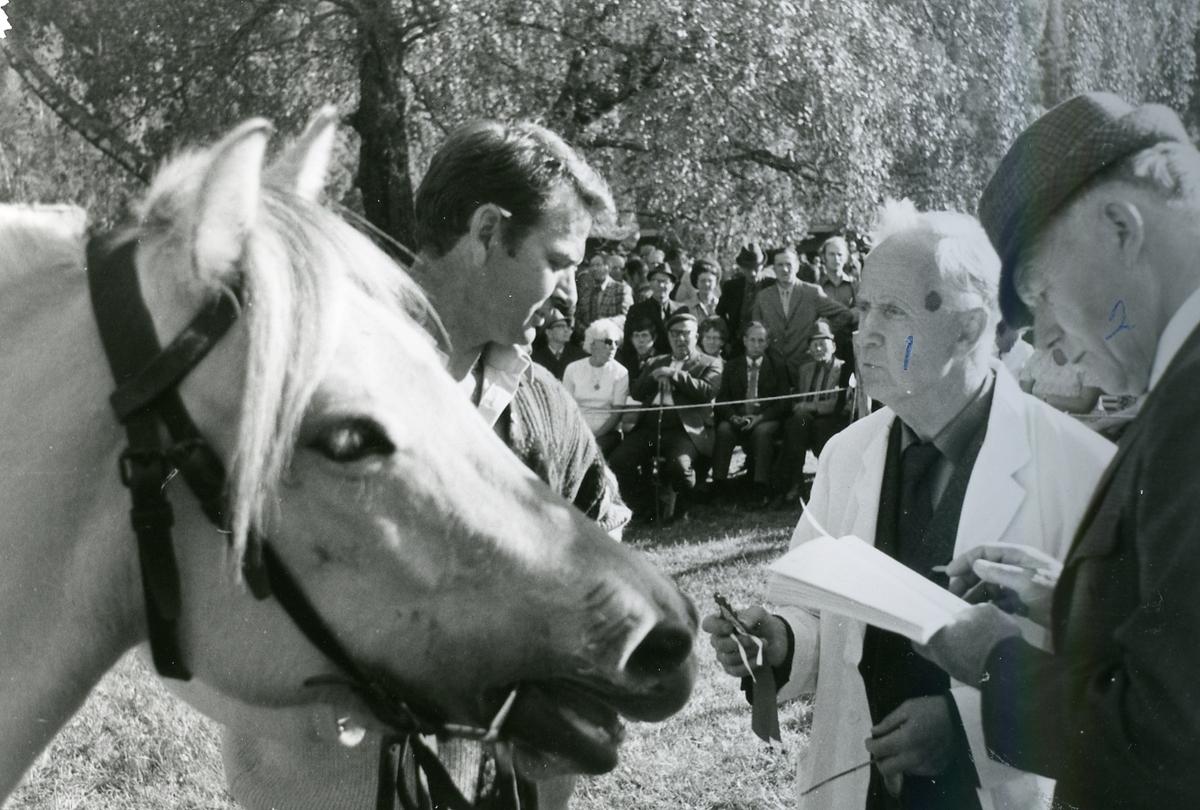 Dømming av hest.