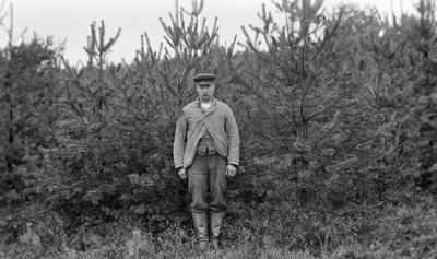 Tolv år gammelt furubestand. En mann med bart, skjermlue og jakke står foran bestandet. Skogplanting.