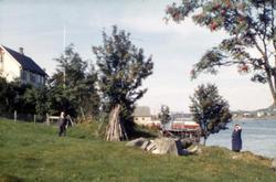 "Høgme ?.(se dias) .(Eske 3 er merket ""Oterøya 1965, Tautra M"