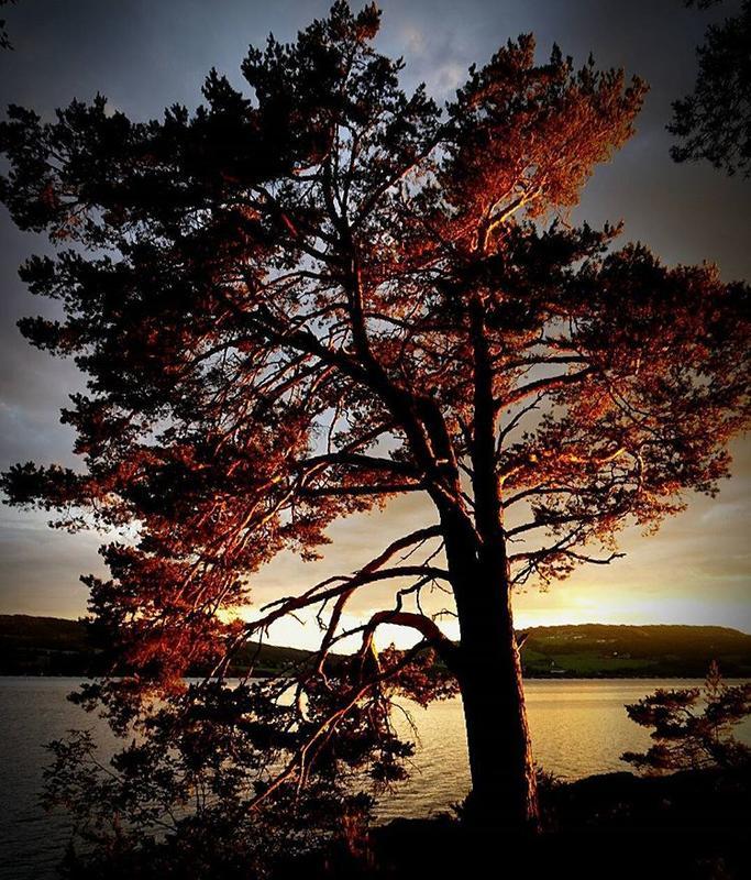 """Junivinner i fotokonkurransen """"Det fantastiske treet""""."""