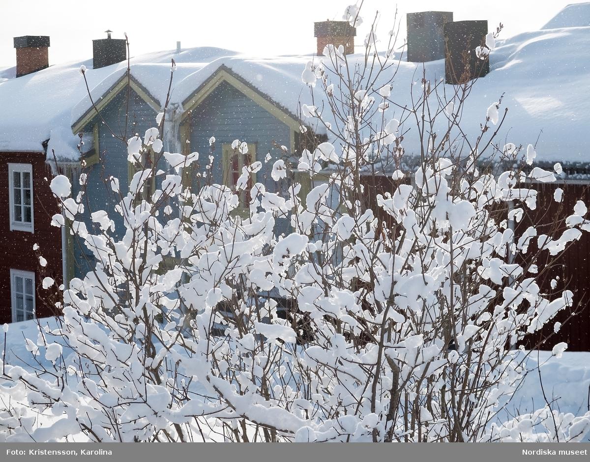 Vilhelmina, snö, Arktis