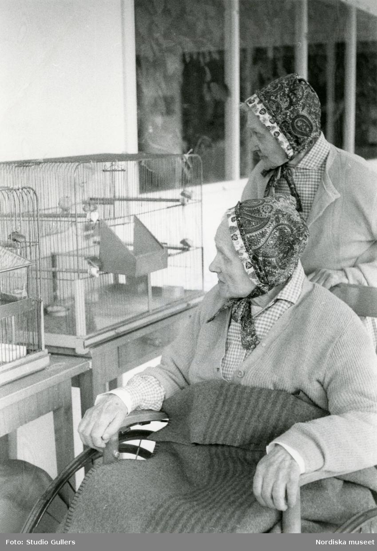 Två äldre kvinnor i hättor tittar på en fågelbur.