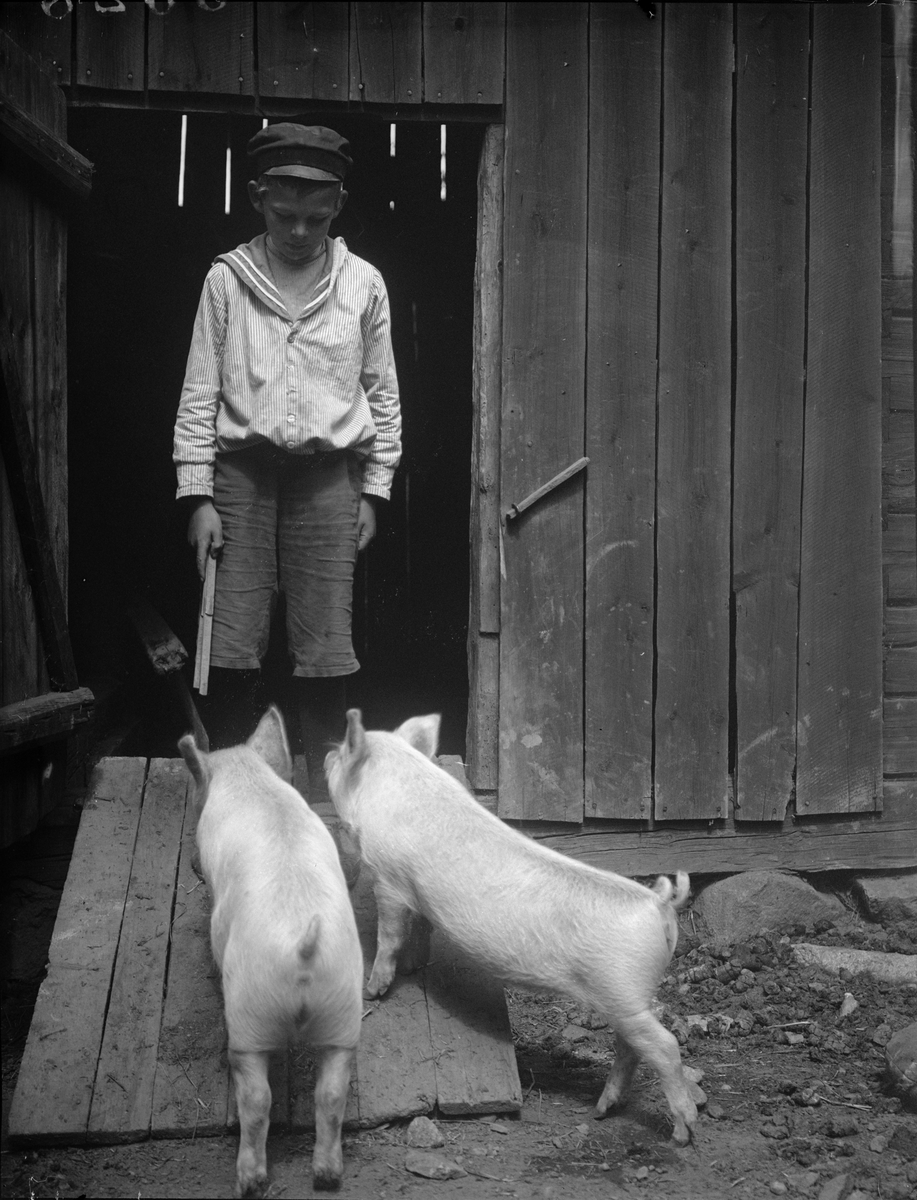 """Harry Lindberg Aneberg Altuna med grisarna"", Uppland 1922"