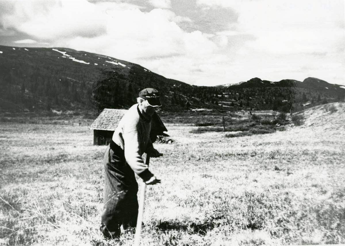 Gunvald Hagene tar åsslåtten i Bjødalen på slutten av 1970-åra.