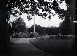 Bild tagen i Tuna trädgård.
